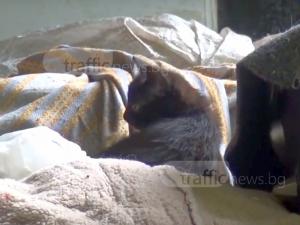 ЧСИ-та и полиция прибраха десетки котки от воняща къща, собственичките плашат с взрив ВИДЕО