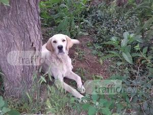 Изоставиха куче без храна и вода на синджир в Труд, има нужда от дом СНИМКИ