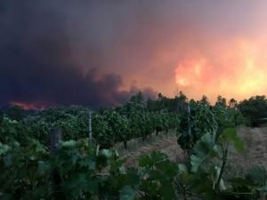 Огнен ад отне живота на 19 души в Португалия