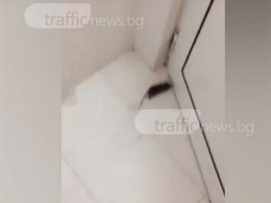 Мишка налази ресторант в Кючука ВИДЕО