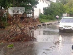 Лятна буря удари Пловдив! Ураганен вятър и гръмотевици се стовариха над града ВИДЕО