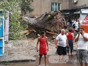 Огромно дърво падна върху къщи в Столипиново СНИМКИ+ВИДЕО