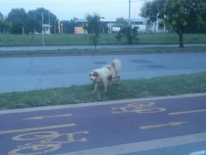 Намерено е мъжко куче в Тракия. Познавате ли си го? СНИМКИ