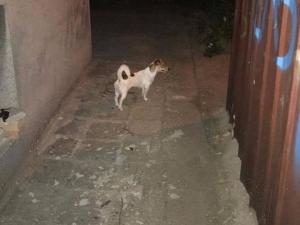 Куче се скита само в Кършияка, познавате ли стопаните му? СНИМКИ*