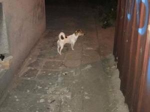 Добра новина: Изгубеното куче се върна при стопанина си в Пловдив