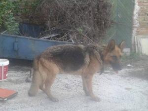 Завързаха куче за дърво край Асеновград - без вода и храна СНИМКИ
