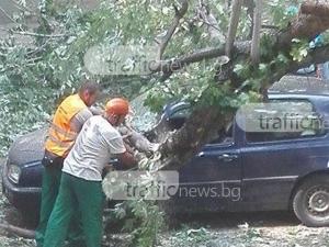 Огромно дърво се стовари върху коли в Пловдив! По чудо няма жертви СНИМКИ