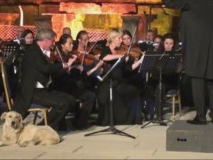 Бездомно куче се включи в концерт на Виенската филхармония ВИДЕО