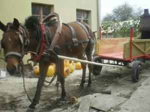 Апаши задигнаха каруца с кобила и катър край Раковски