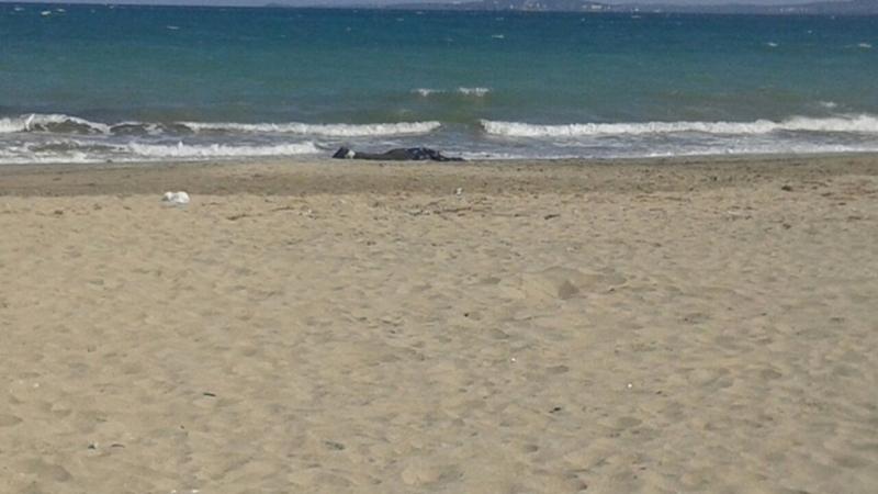 Чешка туристка се удави в Слънчев бряг, издирват 11-годишното й дете
