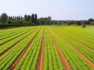 Купуването на земя в България – възможно и за чужденци