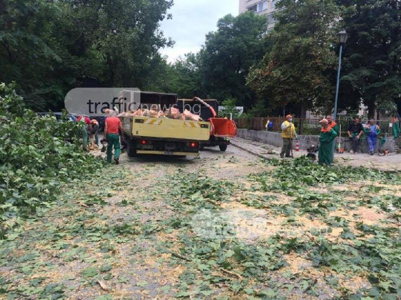 Отрязаха вековно дърво в центъра на Пловдив СНИМКИ