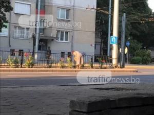 Крала баба китки от булеварда в Пловдив СНИМКА