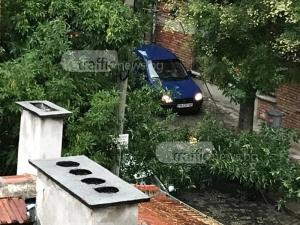 Първи щети от дъжда в Пловдив! Дърво се стовари върху автомобил ВИДЕО и СНИМКИ