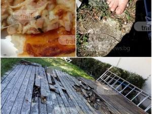 Пица гарнирана с умрели мухи шокира пловдивчани на известен плаж СНИМКИ