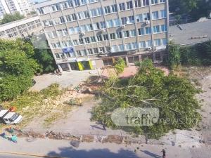 Последни думи на вековно дърво в центъра на Пловдив! Посякоха го СНИМКИ