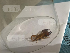 Пловдивчанка откри скорпион в банята си СНИМКИ