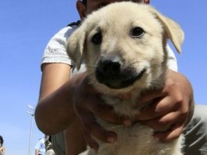 10-годишно дете уби малко кученце в Троян