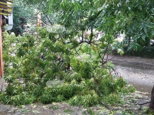 Дърво падна в центъра на Пловдив, бутна улична лампа СНИМКИ
