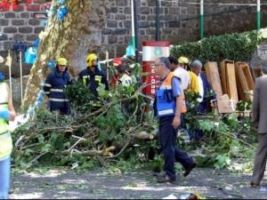 Паднало дърво уби 11 души в Португалия