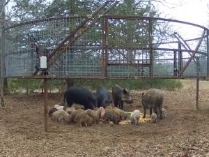 Глад във Венецуела! Нападнаха животните в зоопарка