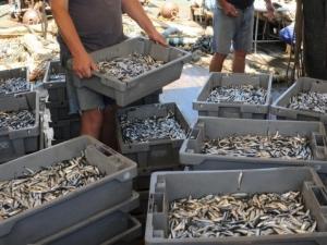 Военните изплашиха рибата по морето, цацата и сафридът дефицит