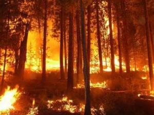 Най-висока степен за опасност от пожари в Пловдив и Пазараджик