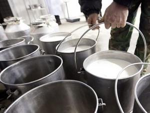 Овче мляко и сирене от Родопите предпазват от няколко вида рак