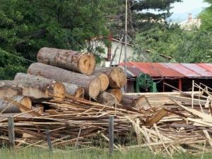 Дърво уби млад пожарникар в Родопите