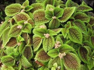 Няколко домашни растения ще донесат повече късмет в дома ви СНИМКИ