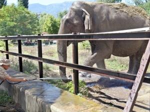 Как се къпе слон и как се хранят маймуните в столичния зоопарк? СНИМКИ и ВИДЕО