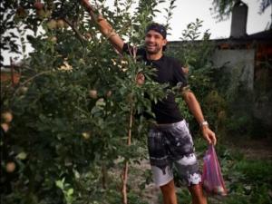 Гришо бере ябълки и домати oт градината в Хасково СНИМКИ