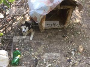 Ужасяваща гледка: Оставиха четири кучета без вода и храна край Асеновград СНИМКИ и ВИДЕО