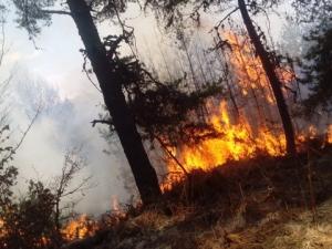 61-годишна жена запали отпадъци в имота си, а огънят опожари горски масив до Велинград