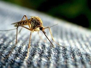 Да се смееш ли, да плачеш ли... Глобяват с 200 бона за неправилно броене на комари