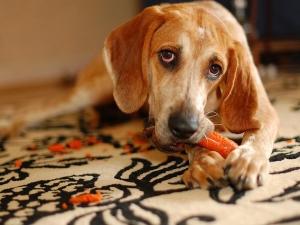Вегани обричат кучетата си, полагайки ги на смъртоносни диети