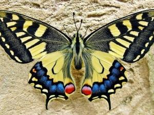 Живи пеперуди ще радват пловдивчани в Природонаучния музей