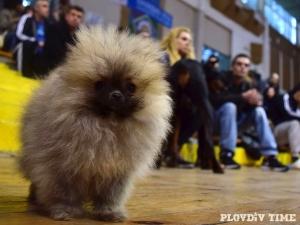 Гребната база става моден подиум! Ексклузивно дефиле на четири лапи сбира елита на кучетата в Пловдив
