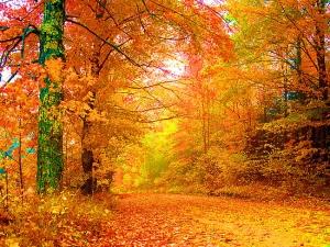 Как есенните цветове ни правят по-щастливи?