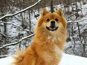 Добри хора откриха изгубеното куче в Пловдив
