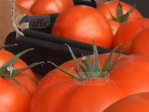 Българи берат домати в робски условия в Италия