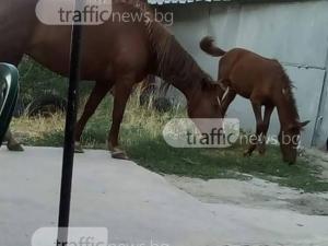 Моторист е в пловдивска болница, блъснал се в… кон