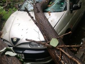 Дърво премаза коли в Пловдив СНИМКА