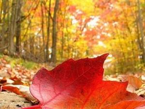 Какво ще бъде времето през октомври?