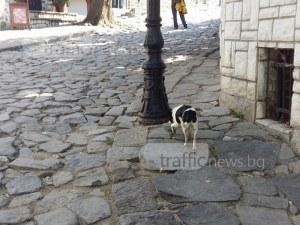 Куче разглежда забележителности в Стария град, търси се собственикът СНИМКА