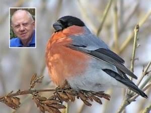 Българските червеношийки