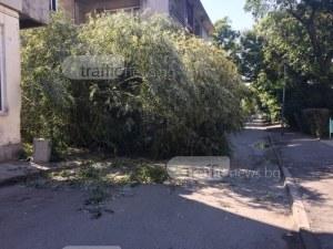 Дърво се стовари до млада жена на улица в Пловдив СНИМКА