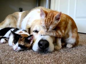 OLX забраниха продажбата на бебета кучета и котки, борят жестокостта към животните