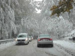 Сняг и паднали дървета блокираха пътища, вижте откъде не може да се мине СНИМКИ