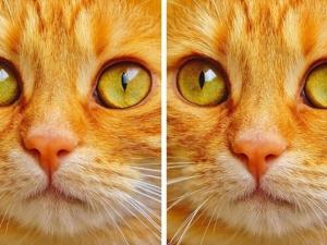 11 картинки с точно по 1 разлика, но можете ли да я откриете? СНИМКИ